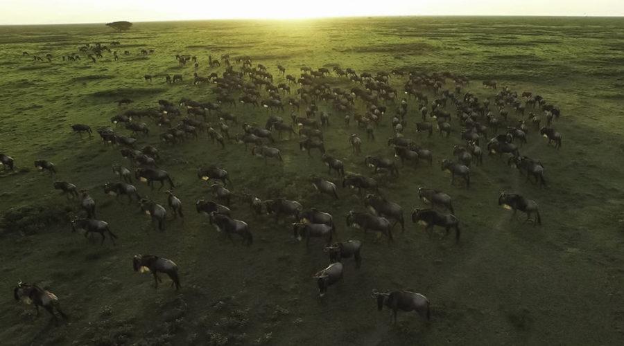 &Beyond safari005