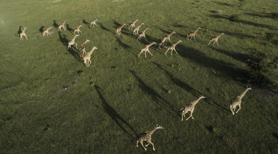 &Beyond safari009