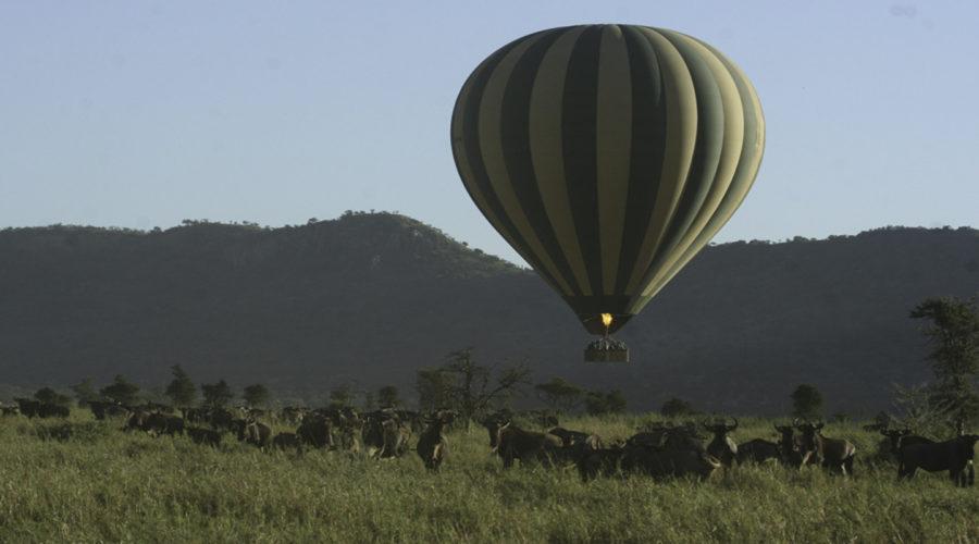 baloon safari03